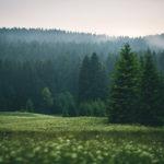Naturfotografie Erzgebirge, Carlsfeld, Erzgebirge, Nils Leonhardt