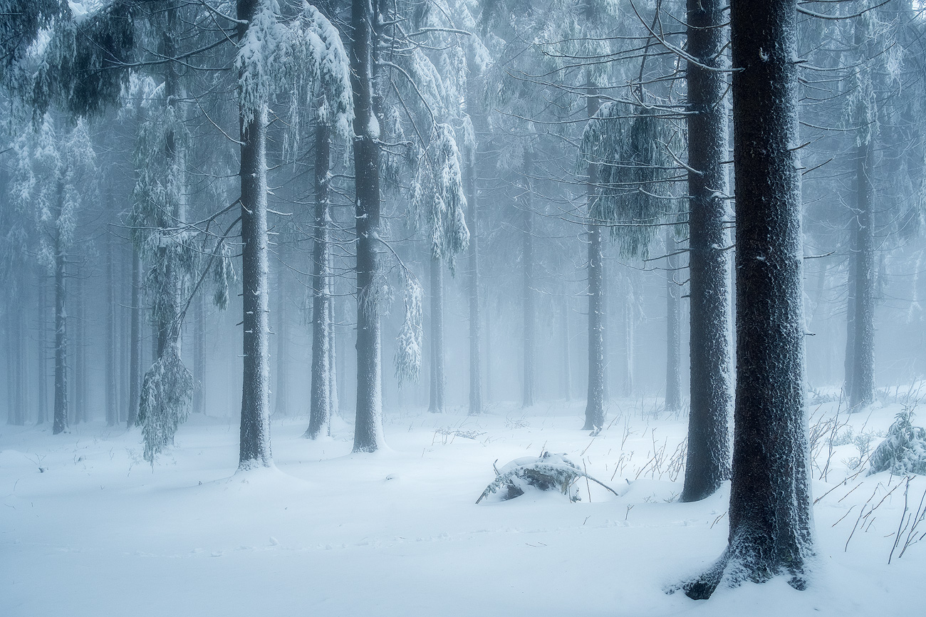 Icy Forest, Blatenský vrch, Czech Republic by Nils Leonhardt