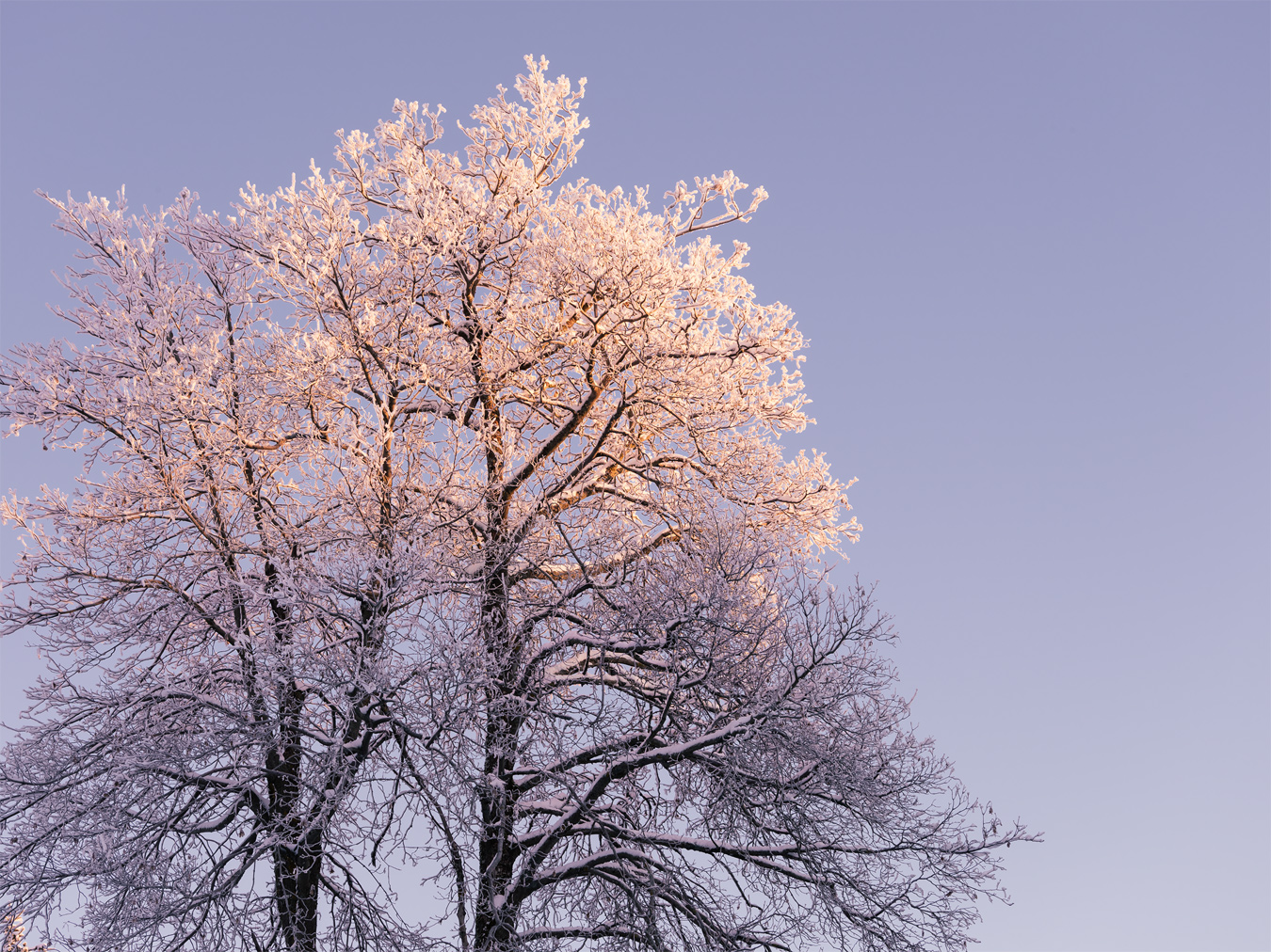 Frosty Tree, Ore Mountains, Germany by Nils Leonhardt