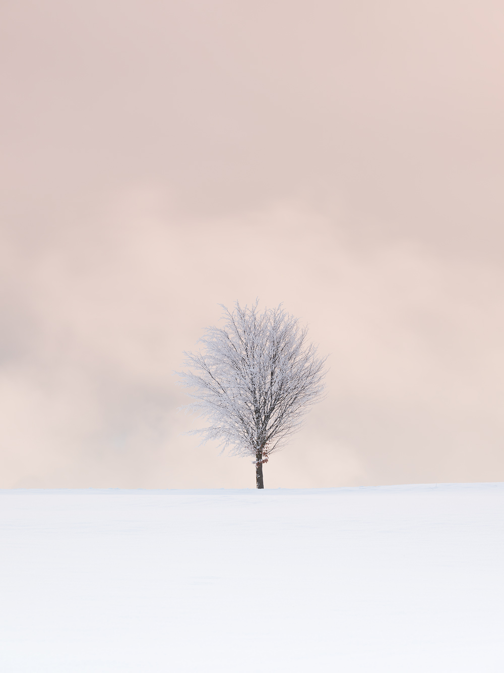 Lone Tree, Ore Mountains, Germany by Nils Leonhardt