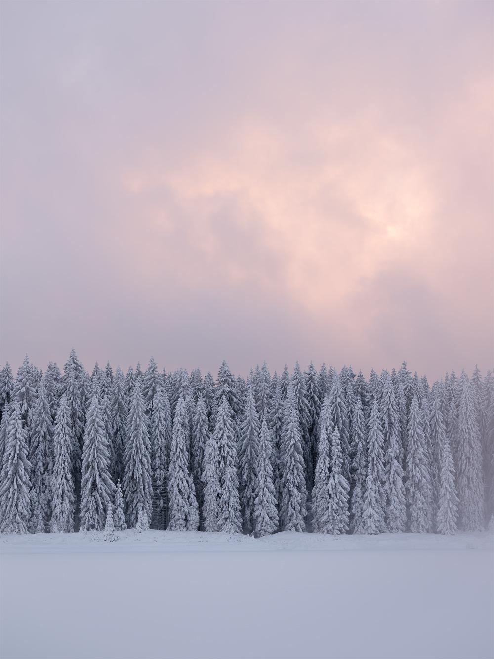 Snow Soldiers, Saxony, Germany by Nils Leonhardt