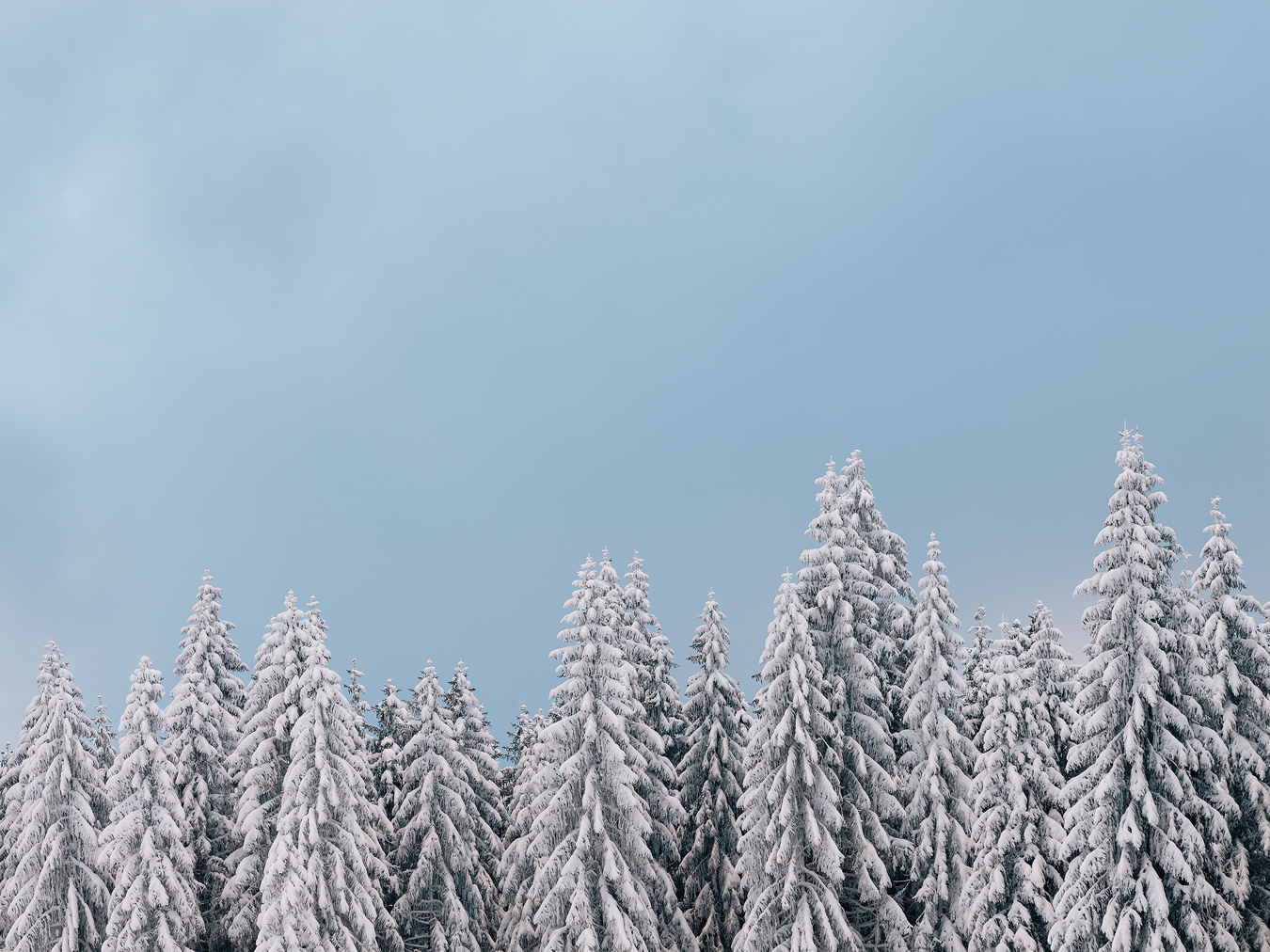 Pop-Art Winter-Trees, Ore Mountains, Germany by Nils Leonhardt