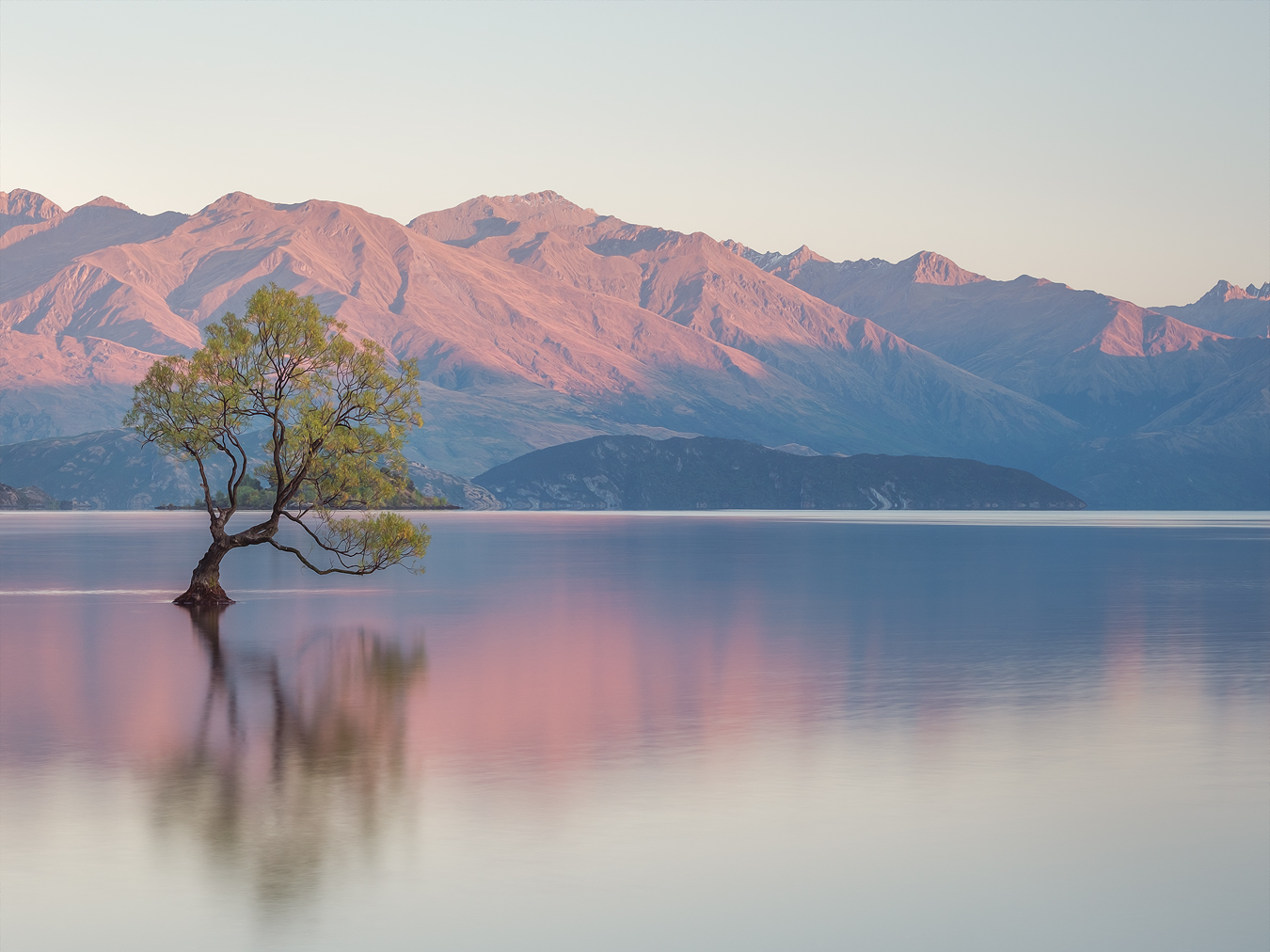That Wanaka Tree, Wanaka, New Zealand by Nils Leonhardt