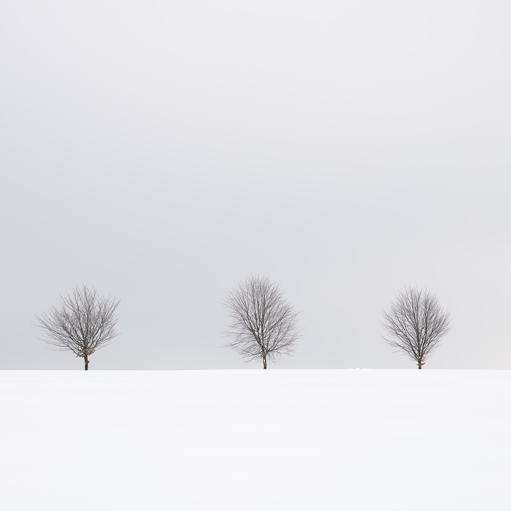 Tree Line, Ore Mountains, Germany by Nils Leonhardt